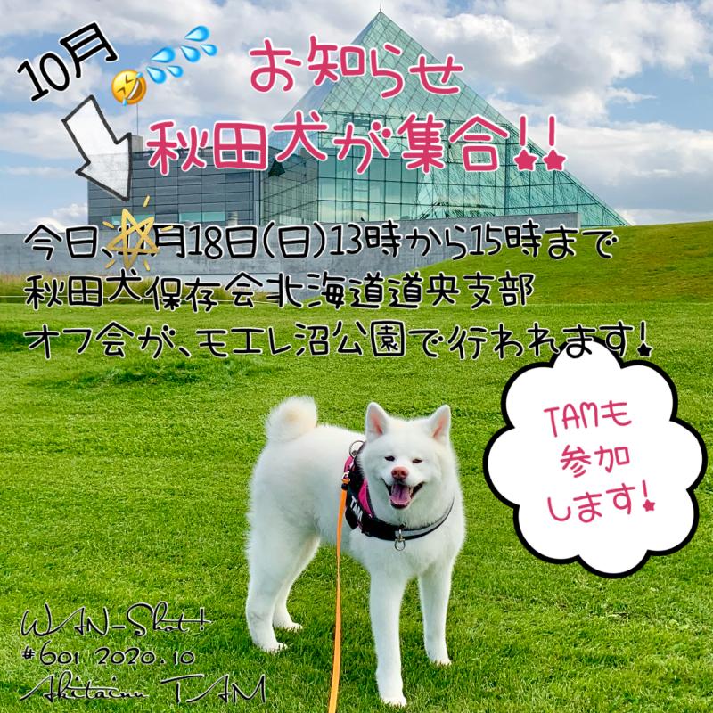 秋田犬保存会北海道道央支部 オフ会
