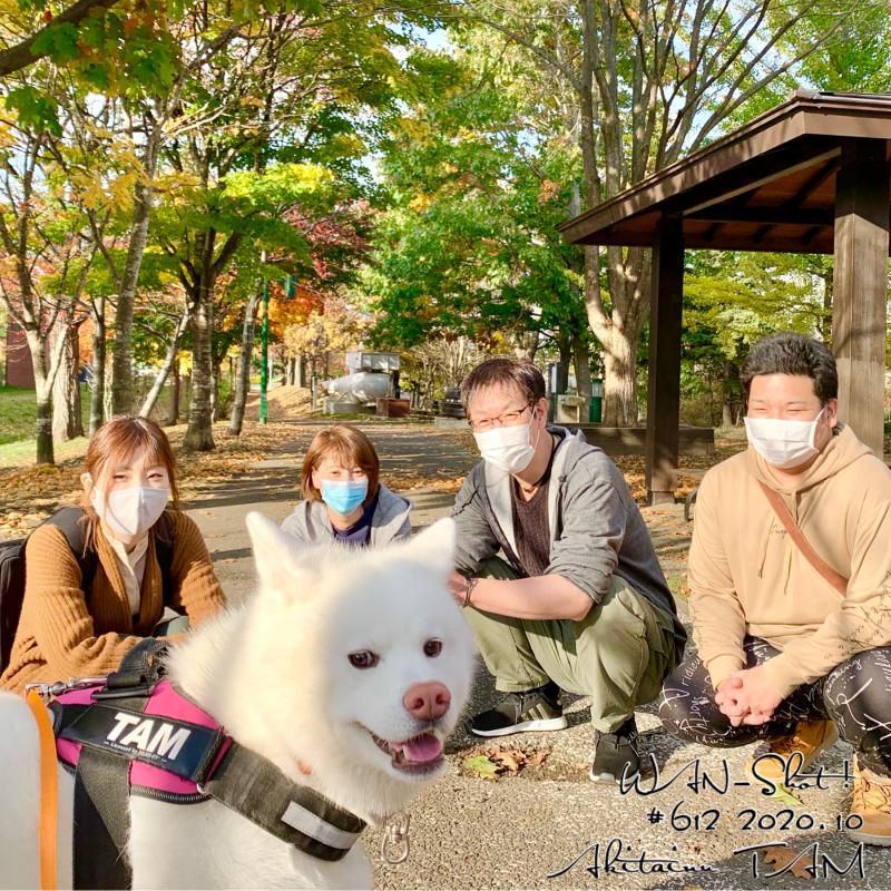 秋田犬と散歩