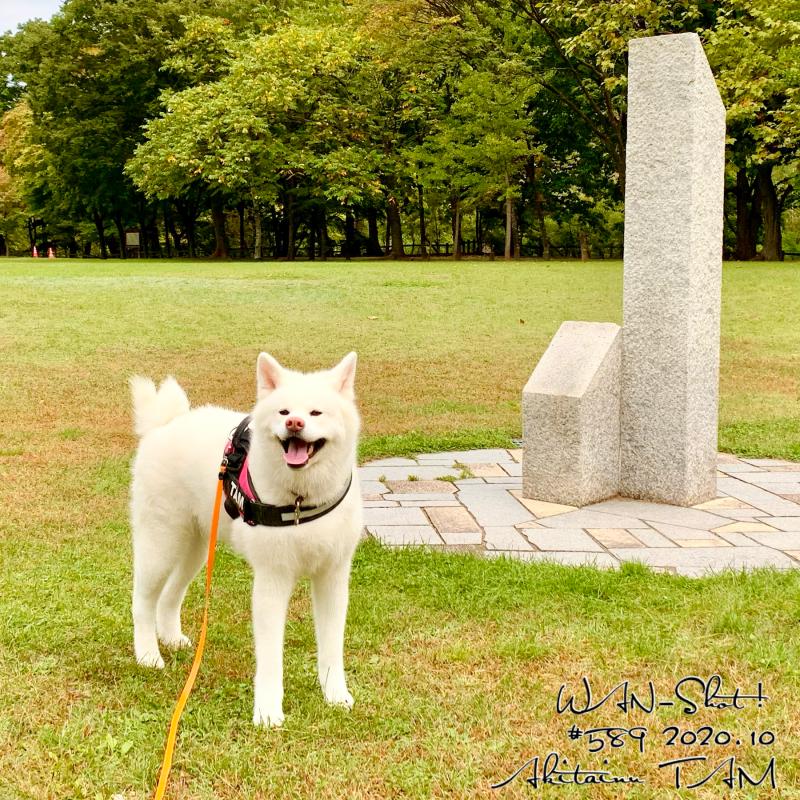 秋田犬と藻南公園